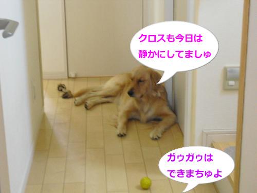 CIMG3646_convert_20100923082601.jpg