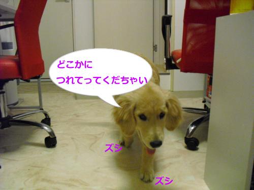 CIMG3662_convert_20100924090744.jpg