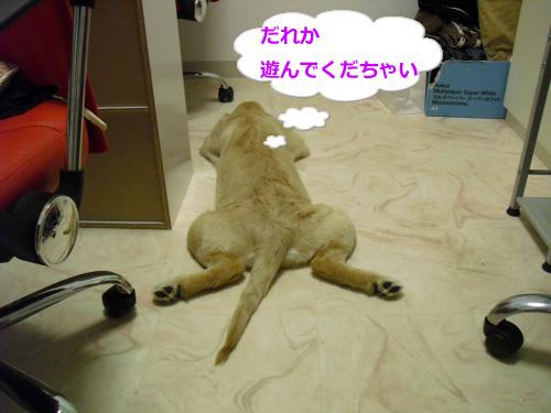 CIMG3664_convert_20100924090910.jpg