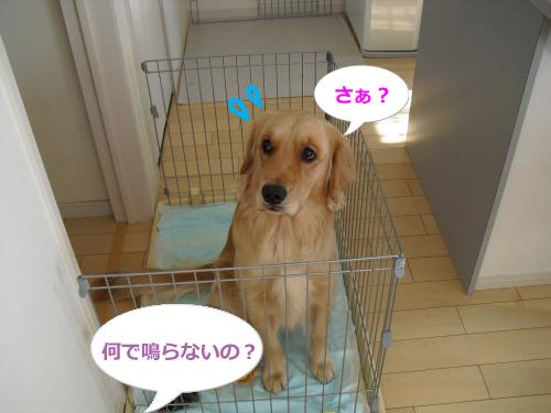 CIMG3668_convert_20100925084516.jpg