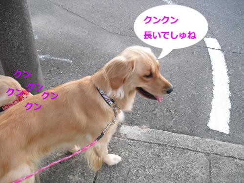 CIMG3681_convert_20100927115751.jpg