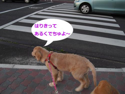 CIMG3683_convert_20100927115821.jpg