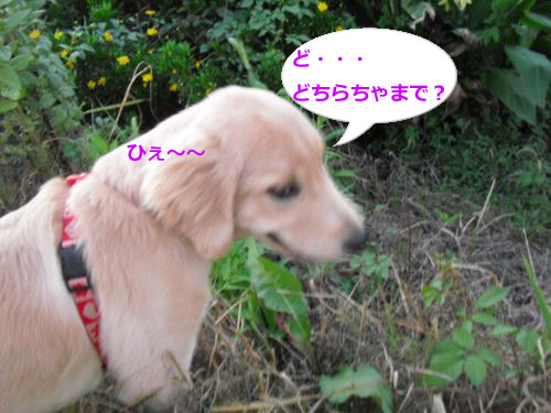 CIMG3693_convert_20100927115931.jpg