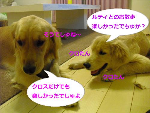 CIMG3708_convert_20100927120109.jpg
