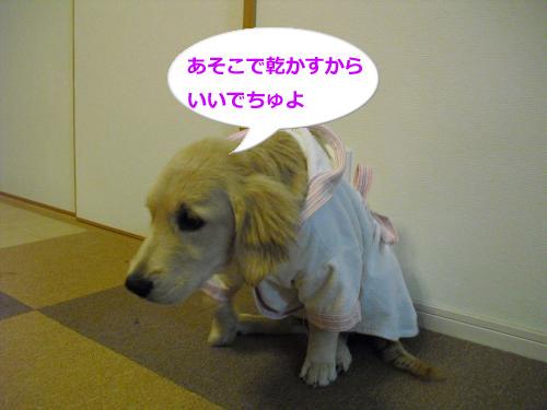 CIMG3747_convert_20100929113125.jpg