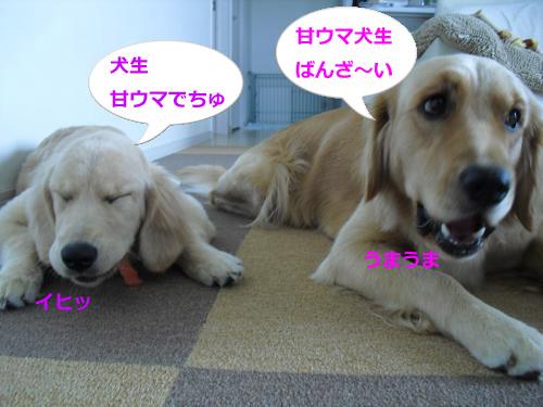 CIMG3794_convert_20101006081723.jpg