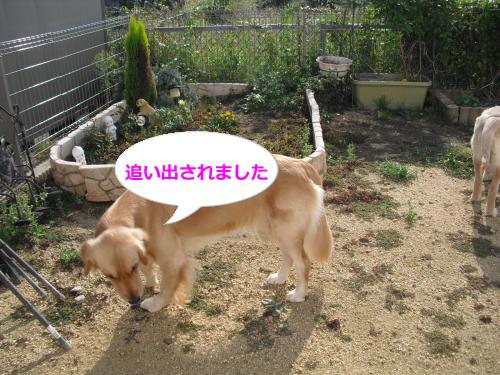 CIMG3810_convert_20101008191206.jpg