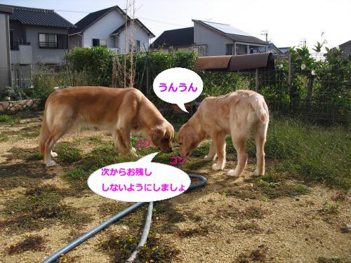 CIMG3823_convert_20101008191346.jpg