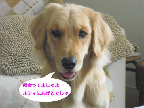 CIMG3856_convert_20101026081300.jpg