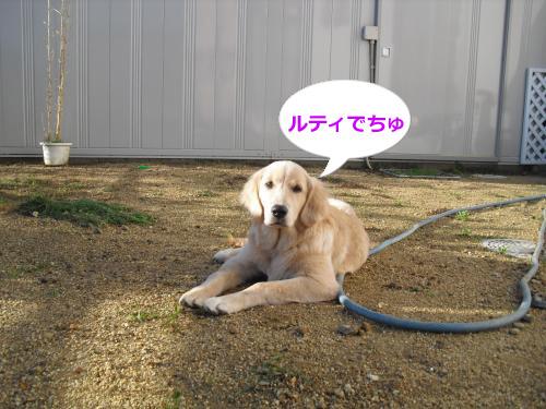 CIMG4068_convert_20101103080453.jpg