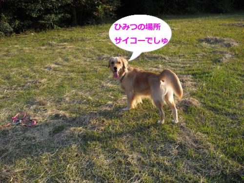CIMG4166_convert_20101108081631.jpg