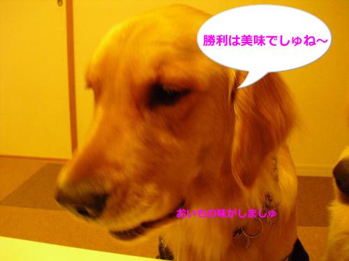 CIMG4179_convert_20101110081253.jpg