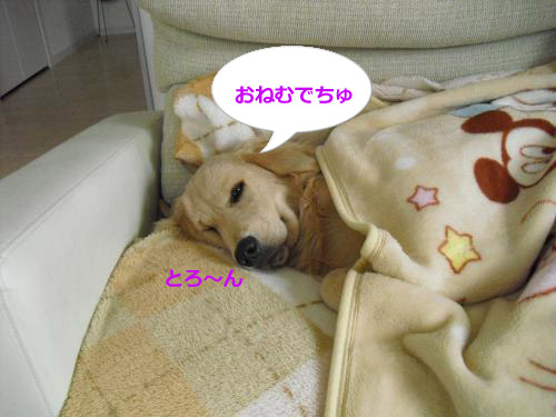 CIMG4229_convert_20101113084649.jpg