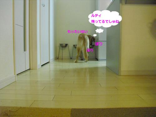CIMG4244_convert_20101113085215.jpg