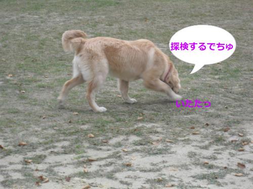 CIMG4343_convert_20101115072253.jpg