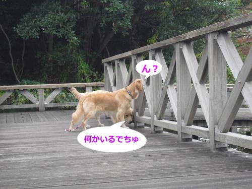 CIMG4393_convert_20101115072414.jpg