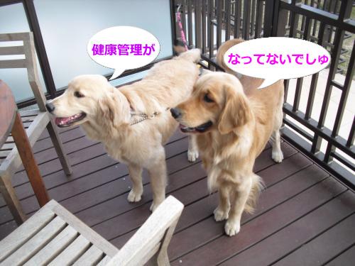 CIMG4444_convert_20101116083026.jpg