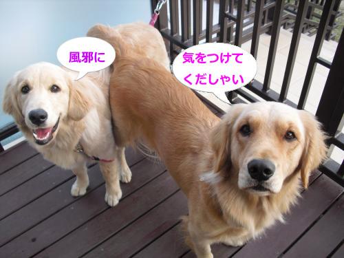 CIMG4447_convert_20101116083605.jpg