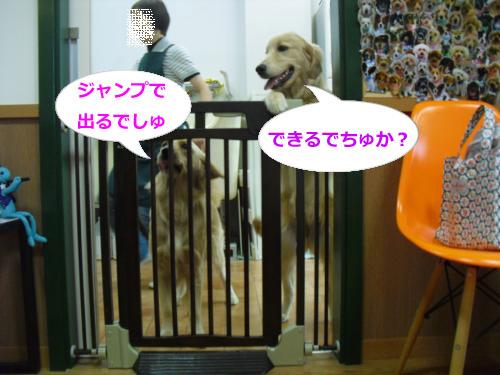CIMG4487_convert_20101118071750.jpg