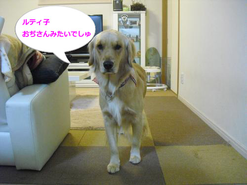 CIMG4502_convert_20101118072100.jpg