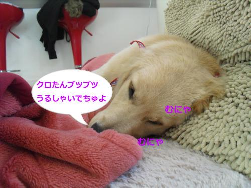 CIMG4512_convert_20101119085627.jpg