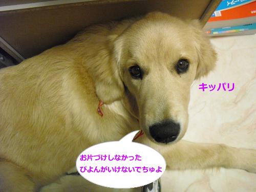 CIMG4517_convert_20101119085858.jpg