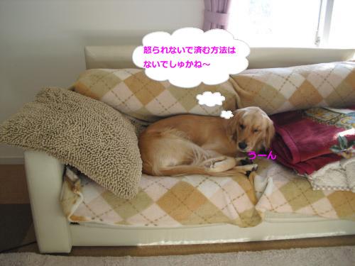 CIMG4519_convert_20101119085924.jpg