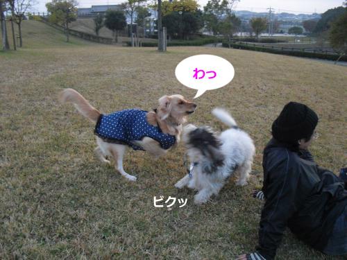 CIMG4536_convert_20101120103557.jpg