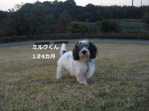 CIMG4544_convert_20101120103835.jpg