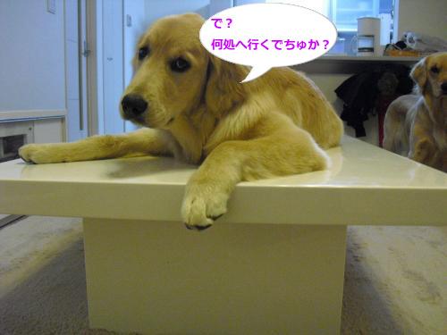 CIMG4561_convert_20101125075737.jpg