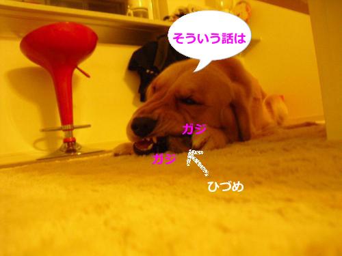 CIMG4583_convert_20101126084613.jpg