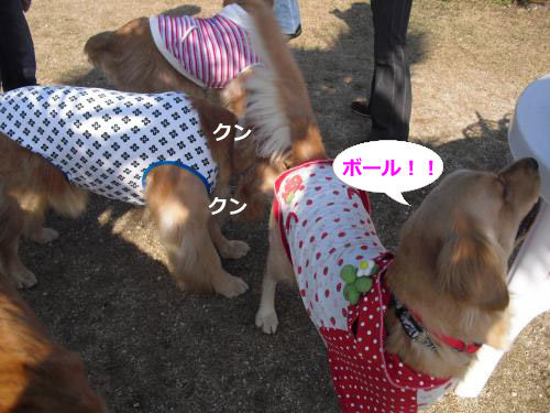 CIMG4626_convert_20101127091817.jpg