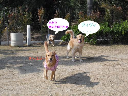 CIMG4650_convert_20101127091433.jpg