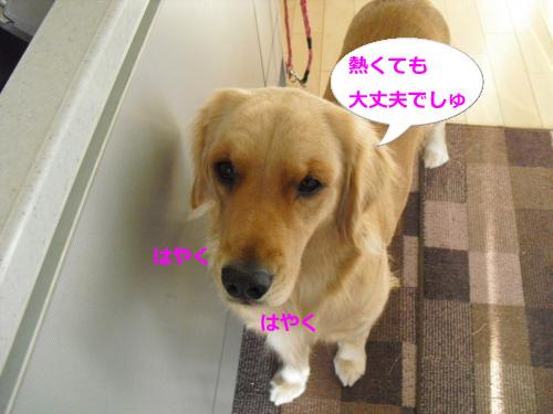 CIMG4933_convert_20101204082713.jpg