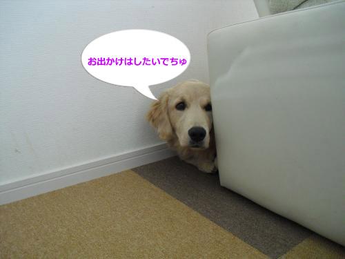 CIMG4949_convert_20101206085130.jpg