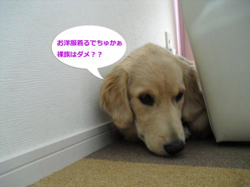 CIMG4950_convert_20101206085157.jpg