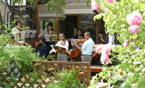 ブログ用バイオリン
