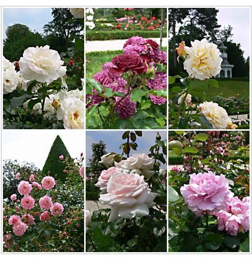 rose_20100619195038.jpg