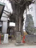 日本橋~神奈川51