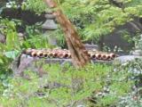 2012/5京都井戸