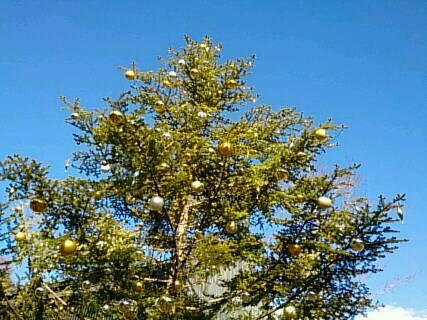 とんぼの湯のクリスマスツリー