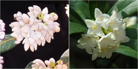 ウツギと沈丁花