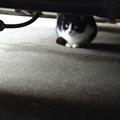 外猫さん(白黒)