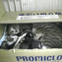 母猫&子猫その1