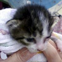 子猫その2