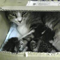 母猫&子猫その2