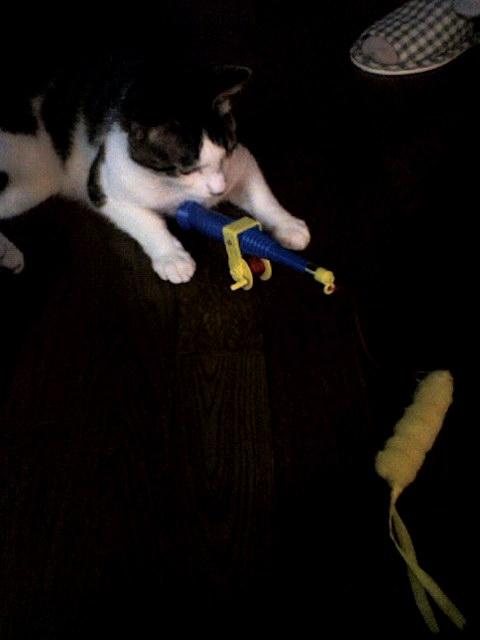 おもちゃを操るスーパーニャンコ