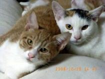 ミカンちゃん&モモちゃん