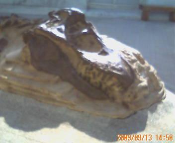 ティラノサウルス頭