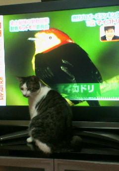 テレビっ子大吉